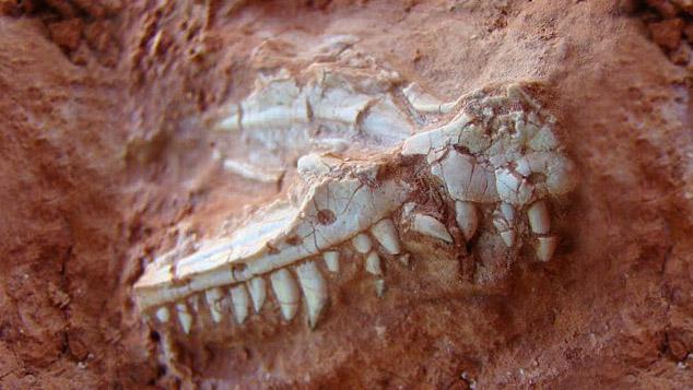 Arjantin'de 230 Milyon Yıllık Dev Dinozor Fosili Bulundu