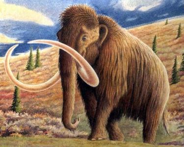 Bilim adamları mamutlara kafayı taktı