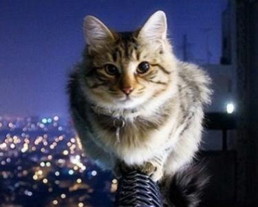 Facebook'tan kedisi olanları üzecek araştırma!