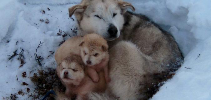 Soğuk havalarda sokak hayvanlarını da unutmayın!