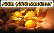 Altın Çilek Mucizesi