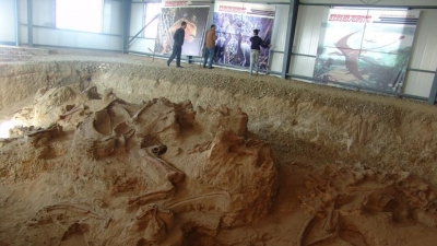 Çinde Ejderha Fosili Bulundu