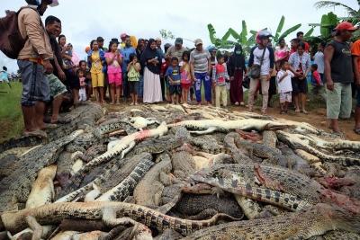ENDONEZYA'DA 292 TİMSAH BİRDEN KATLEDİLDİ